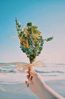 女性,自然,空,花,鮮やか,ミモザ,黄,多彩