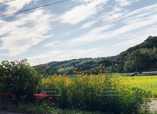 自然,空,秋,屋外,コスモス,雲,晴れ,田舎,山,草,彼岸花,秋空,日中,壱岐