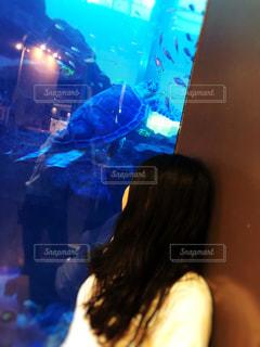 女性,魚,屋内,青,水族館,黒髪,人物,人,ロングヘアー,水槽,亀,ロング,パーマ,ゆるふわ,カール