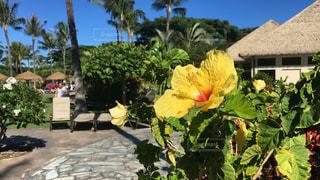 空,花,海外,ハイビスカス,ハワイ,海外旅行,コオリナ