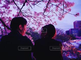夜桜を見るカップルの写真・画像素材[1833083]