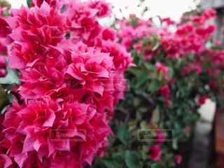 南国の花の写真・画像素材[1950193]