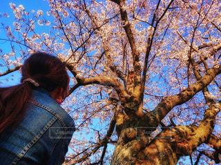 お花見日和🌸の写真・画像素材[1951348]