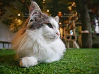 猫の横顔の写真・画像素材[2335828]