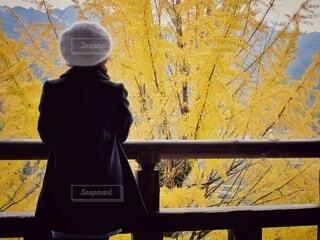 銀杏とわたしの写真・画像素材[3715346]