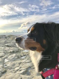 犬の写真・画像素材[1094552]