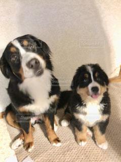 茶色と黒の犬のグループの写真・画像素材[1187134]
