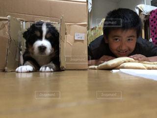 室内,子供,子犬,バーニーズマウンテンドック,手作り小屋