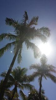 ハワイの青空の写真・画像素材[1096593]
