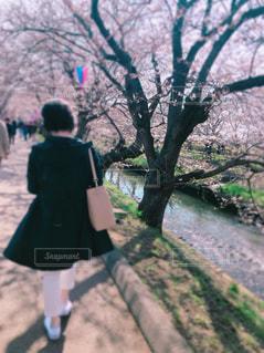 女性,ファッション,春,白,お散歩,春コーデ