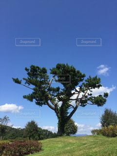 フィールドの大木の写真・画像素材[1119869]