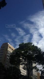 近くの木のアップの写真・画像素材[1126749]
