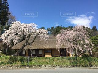 桜,ピンク,岩手,晴れの日,建物と桜