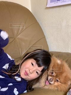 ポメラニアン,お部屋,女の子,4歳,ソファの上
