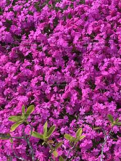 公園内の花壇の写真・画像素材[1132851]