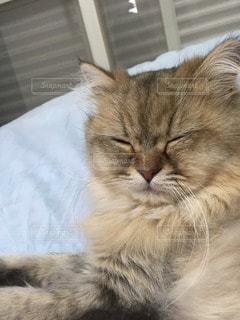 猫の写真・画像素材[12459]