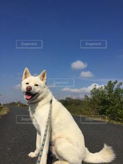 犬の写真・画像素材[1096550]