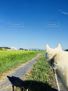 犬の写真・画像素材[1096601]