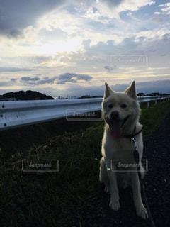 犬の写真・画像素材[1096651]