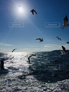 海の写真・画像素材[1096723]