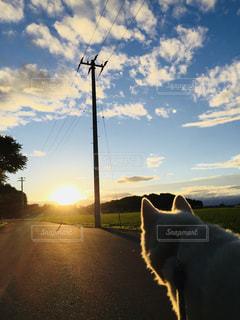 犬の写真・画像素材[1096728]