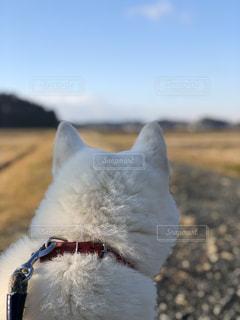 犬の写真・画像素材[1097586]
