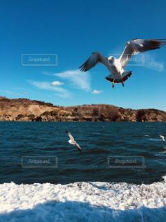 青空の海にカモメが飛んでるの写真・画像素材[1099638]