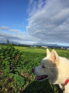 草の中に立っている犬の写真・画像素材[1116170]