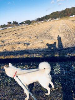 お散歩中の見事な影がの写真・画像素材[1185034]