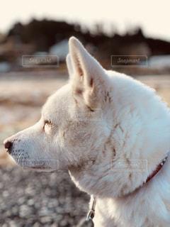 考える犬の写真・画像素材[1185036]