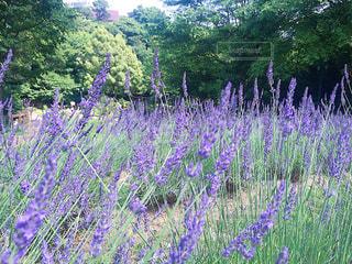 日本の花絶景の写真・画像素材[1123659]