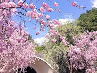 日本の花絶景の写真・画像素材[1123660]