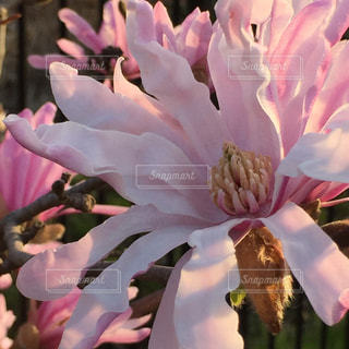 近くの花のアップの写真・画像素材[1392918]