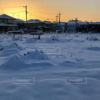 雪の家庭菜園の写真・画像素材[2839845]