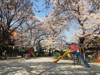 桜,東京,TOKYO,ソメイヨシノ