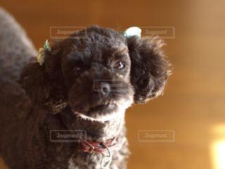 近くに犬のアップの写真・画像素材[1220048]