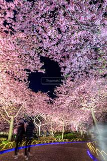風景,春,桜,夜,夜景,絶景,ハート,明るい,heart