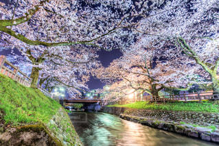 自然,風景,春,桜,夜,夜景,絶景,屋外,水面,樹木,ハート,明るい,heart
