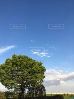 フィールドの大木の写真・画像素材[1119867]