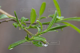 近くの緑の植物をの写真・画像素材[1103265]