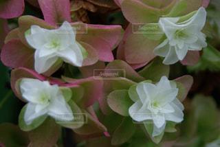 花のアップの写真・画像素材[1125257]
