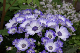 近くに紫の花のアップ - No.1127409