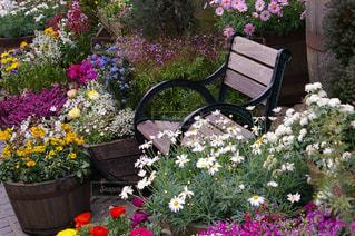 庭のベンチに座っている紫色の花一杯の花瓶の写真・画像素材[1127411]