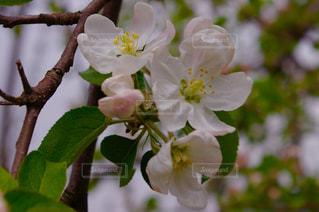 植物の白い花の写真・画像素材[1127422]