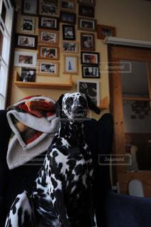 部屋に座っている犬の写真・画像素材[1184703]