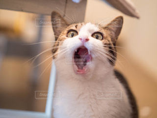 猫のクローズアップの写真・画像素材[2294916]