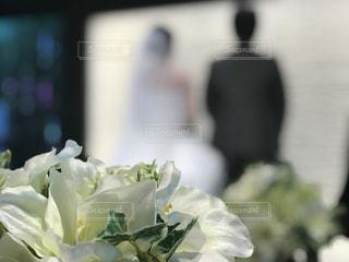 近くの花のアップの写真・画像素材[1235811]