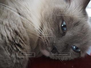 近くに猫のアップの写真・画像素材[1277202]