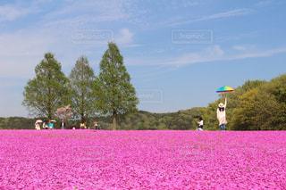 芝桜と人物の写真・画像素材[1149030]
