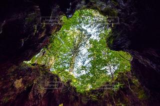 森の中の大きな滝 - No.1112989